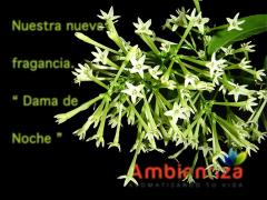Ambientadores, ambientador, aromatizador, aromatizadores, aromas, fragancias, dama de noche